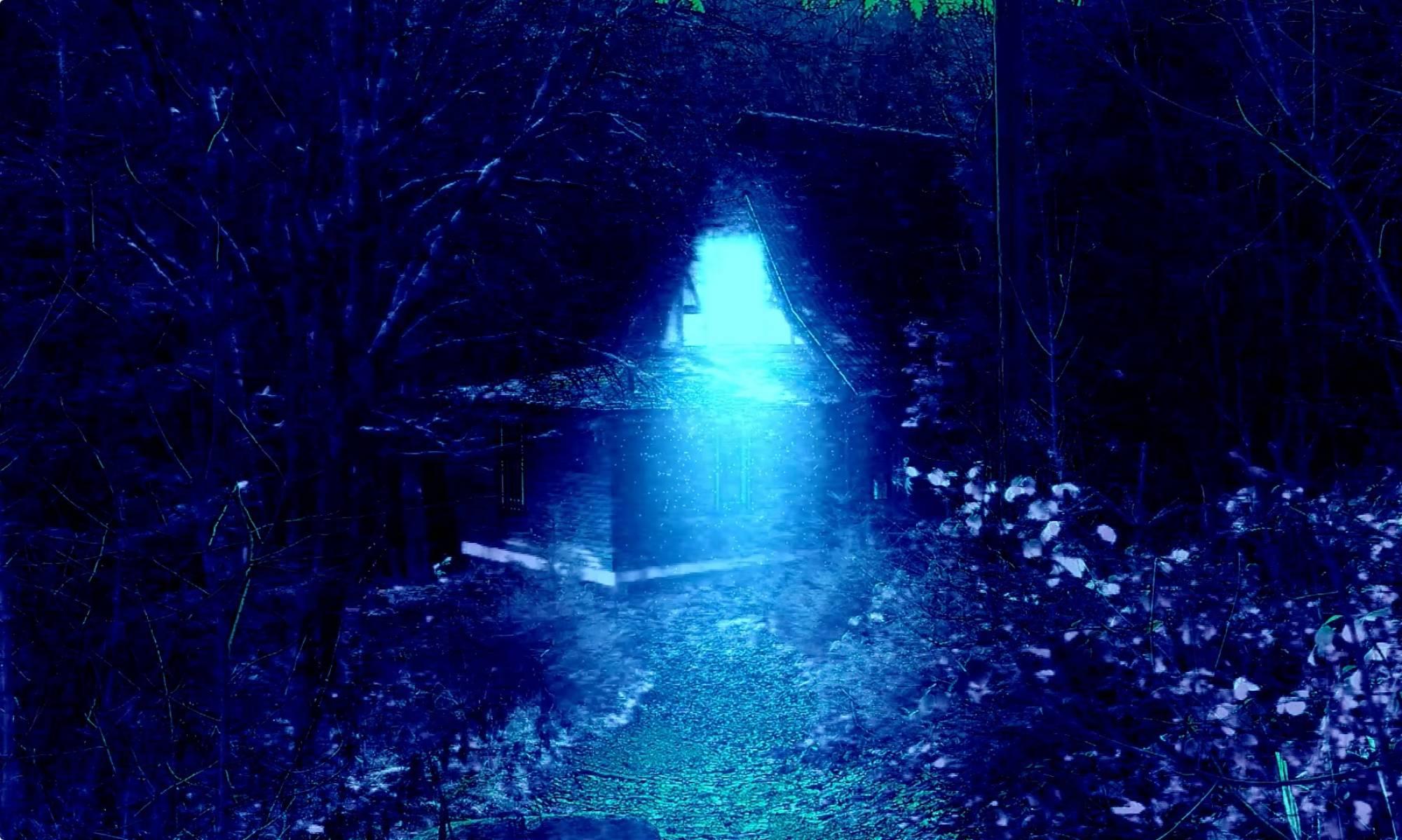 The Forest Dark
