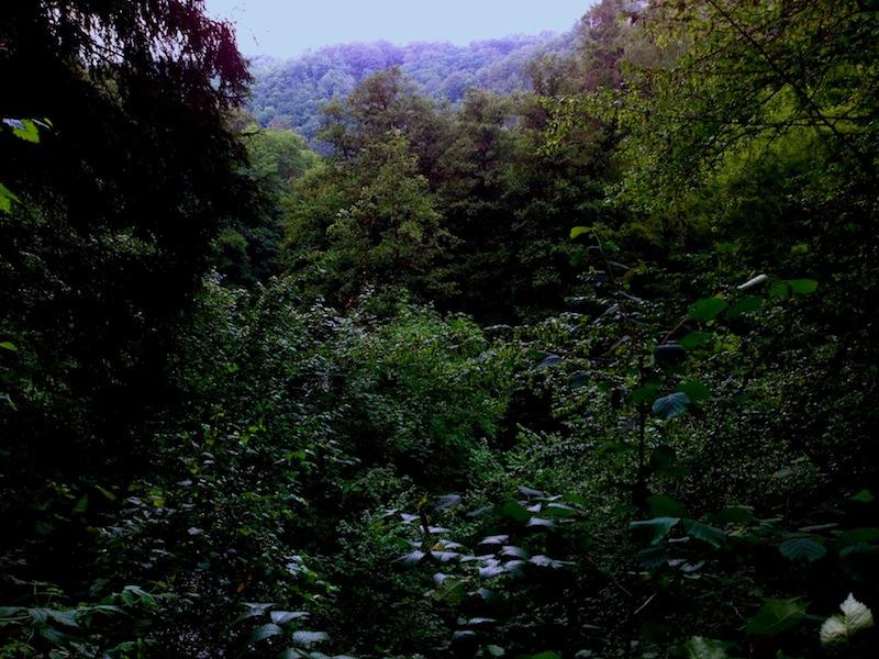 The Forest Dark As Archetype The Forest Dark